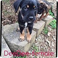 Adopt A Pet :: Dee Dee (ETAA) - Harrisonburg, VA
