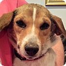 Adopt A Pet :: Pammy