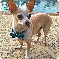 Adopt A Pet :: Sid - Houston, TX