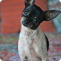 Adopt A Pet :: Howie - Staunton, VA
