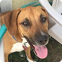 German Shepherd Dog/Hound (Unknown Type) Mix Dog for adoption in Torrington, Wyoming - Annie