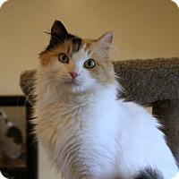 Adopt A Pet :: Jane Austen - Gaithersburg, MD