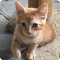Adopt A Pet :: Peanut - Madison, NJ