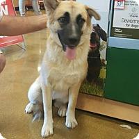 Shepherd (Unknown Type) Mix Dog for adoption in Olympia, Washington - Micah