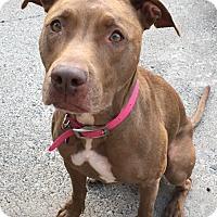 Adopt A Pet :: Nala - Mayer, MN