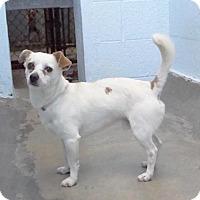 Adopt A Pet :: Danny - Hawthorne, CA