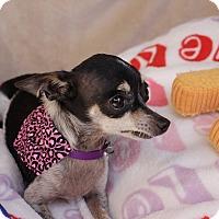 Adopt A Pet :: Avery - Hamilton, ON