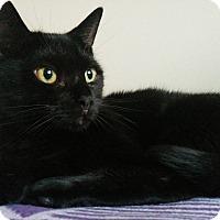 Adopt A Pet :: Cleo - Toronto, ON