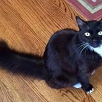 Adopt A Pet :: Tantalizing Toby - San Francisco, CA