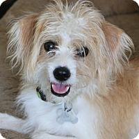 Adopt A Pet :: Quinn - MEET ME - Woonsocket, RI