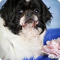 Adopt A Pet :: Greta(PENDING) - Inver Grove, MN
