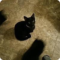 Adopt A Pet :: Jack,Stetson, Tippy - Minneapolis, MN
