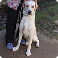 Adopt A Pet :: Dunkin - DeForest, WI