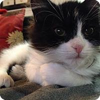 Adopt A Pet :: Matilda - Toronto, ON