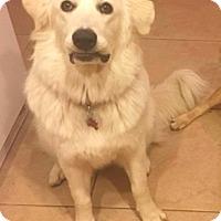 Adopt A Pet :: Melanie - Santa Clarita, CA