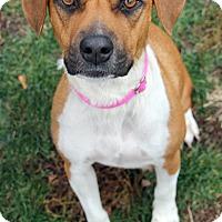 Adopt A Pet :: Tina - Harrison, NY
