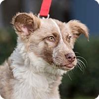 Adopt A Pet :: Harlow - San Diego, CA