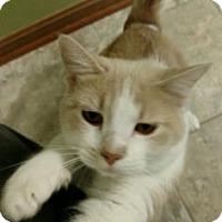 Adopt A Pet :: Melodie - Des Moines, IA