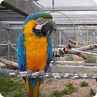 Adopt A Pet :: Bob - Elizabeth, CO