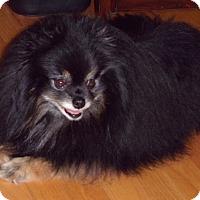 Adopt A Pet :: Finn - Woodinville, WA