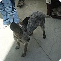 Adopt A Pet :: Roxy - Orange Cove, CA