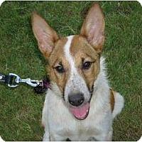 Adopt A Pet :: Shelly - Arlington, TX