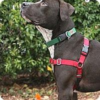 Adopt A Pet :: Trace - Santa Barbara, CA