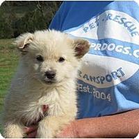 Adopt A Pet :: Trucker - Westbrook, CT