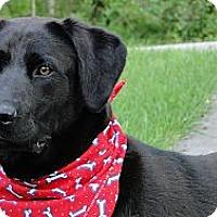 Adopt A Pet :: Barkley - Lewisville, IN