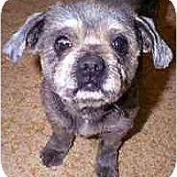 Adopt A Pet :: Bruno - dewey, AZ