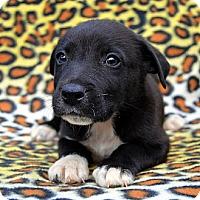 Adopt A Pet :: Ephesus - Garland, TX