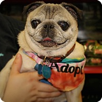Adopt A Pet :: Lizzie - Austin, TX