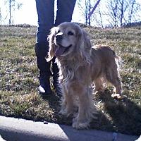 Adopt A Pet :: Emma-Adopted! - Kannapolis, NC