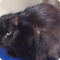 Adopt A Pet :: Wailua - Colorado Springs, CO