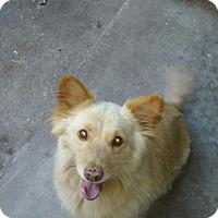 Adopt A Pet :: Sammie - Lomita, CA
