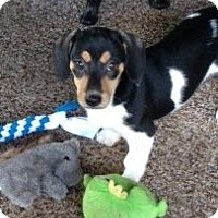 Adopt A Pet :: Makita - Knoxville, TN