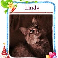 Adopt A Pet :: Lindy - Harrisburg, NC
