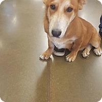 Adopt A Pet :: Quinn - Fresno, CA