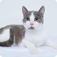 Adopt A Pet :: Elsa - Chico, CA
