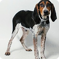 Adopt A Pet :: Jethro - Cleveland, OH