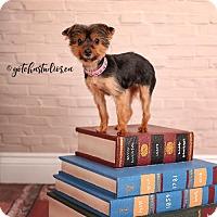 Adopt A Pet :: Mika 3221 - Toronto, ON