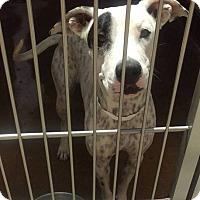 Adopt A Pet :: McKayla - Las Vegas, NV