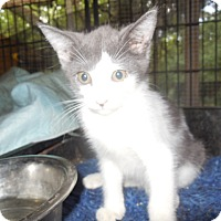 Adopt A Pet :: Buttons - Old Town, FL