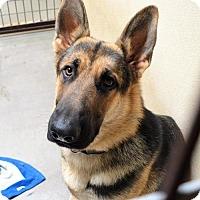 Adopt A Pet :: Rambo - San Jacinto, CA