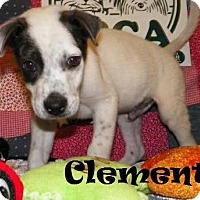 Adopt A Pet :: Clement - Ringwood, NJ