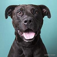 Adopt A Pet :: Kayden - Anniston, AL