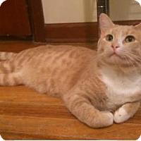 Adopt A Pet :: PB - Wichita, KS