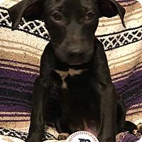 Adopt A Pet :: Fanta - Garden City, MI