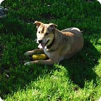 Adopt A Pet :: A570750 - Oroville, CA
