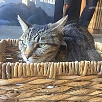 Adopt A Pet :: Ace - Santa Monica, CA